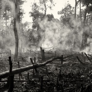 A parcel of forest is cleared to start a new coffee plantation.