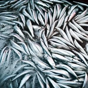 Fresh sardines into ice.
